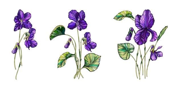 Composição floral de vetor de flores de violetas. Vetor Premium