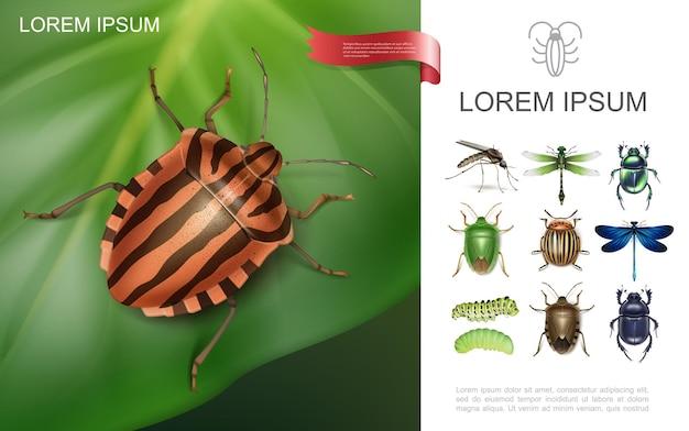 Conceito colorido de insetos realistas com besouro do colorado em folha de batata, libélulas, mosquitos, lagartas, esterco e escaravelhos Vetor grátis