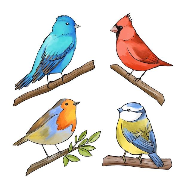 Conceito de coleção de pássaros em aquarela Vetor Premium