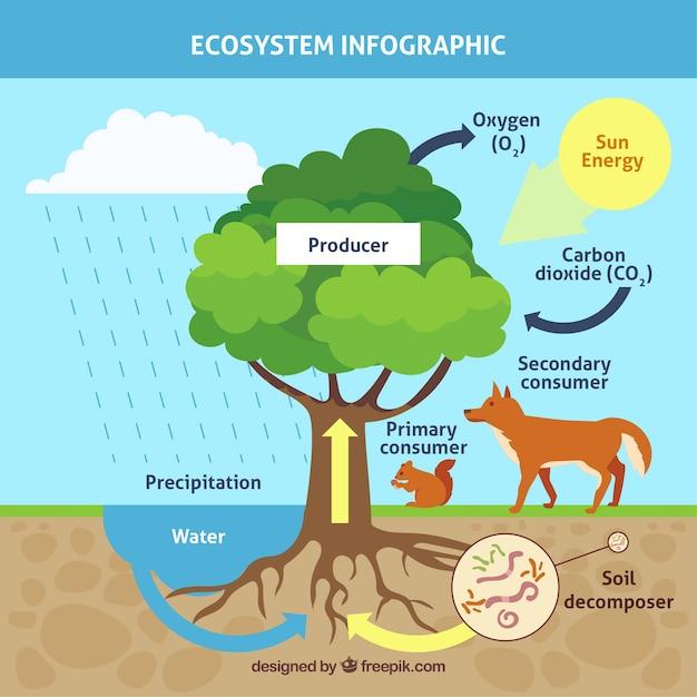 Conceito de ecossistema infográfico com árvore Vetor grátis