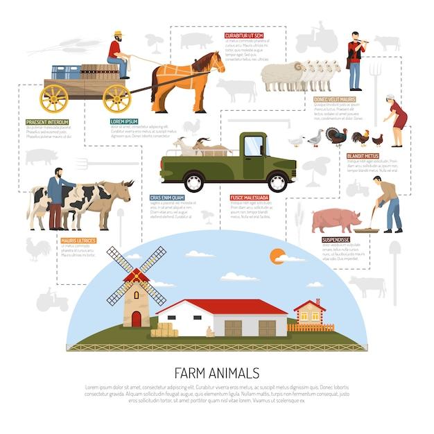 Conceito de fluxograma de animais de fazenda Vetor grátis