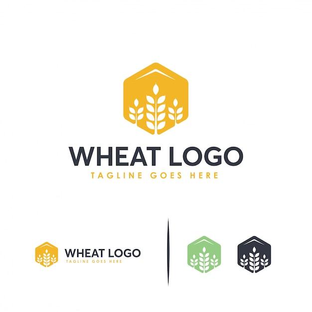 Conceito de logotipo de trigo de grão Vetor Premium