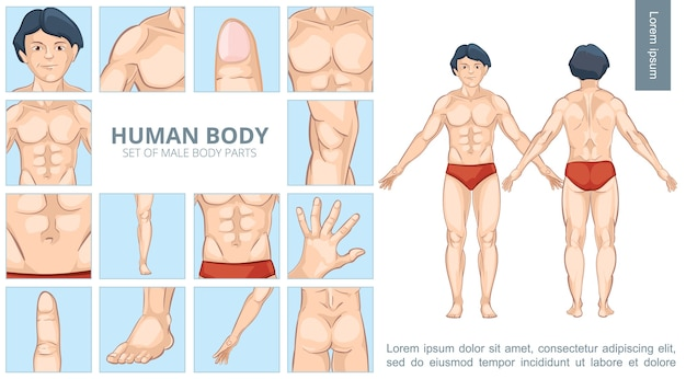 Conceito de partes do corpo masculino de desenho animado Vetor grátis