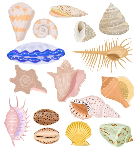 Conchas marinhas conchas e oceano conjunto de ilustração subaquática berbigão-concha de frutos do mar e moluscos ou concha isolado no fundo branco Vetor Premium