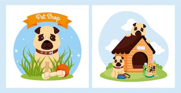 Dogtor House - Hospital Veterinario - Home | Facebook