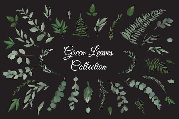 Conjunto coleção de ervas de folhas verdes em estilo aquarela. Vetor Premium