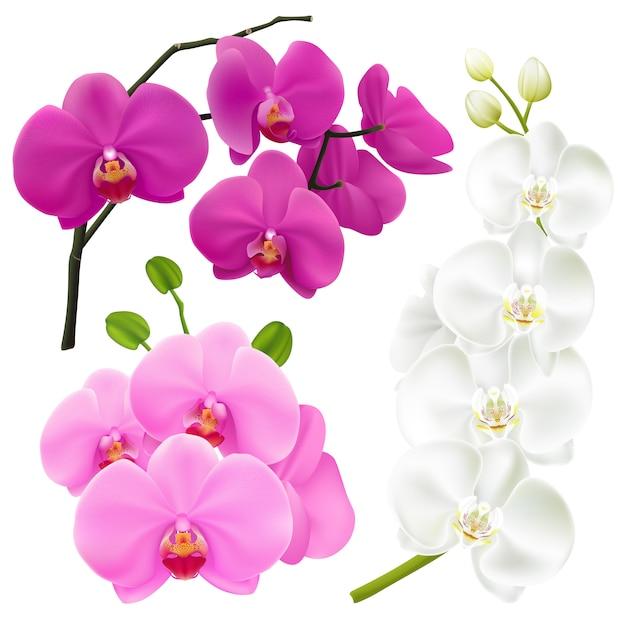 Conjunto colorido realista de flores de orquídea Vetor grátis