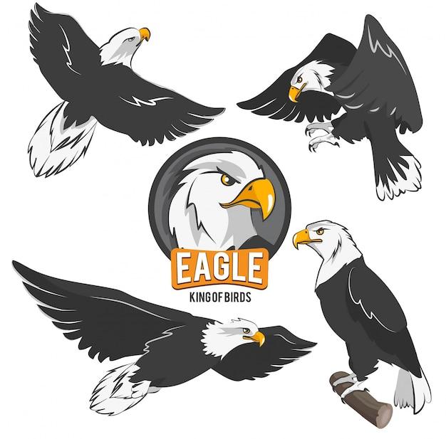 Conjunto de águias dos desenhos animados em poses de ação diferentes Vetor Premium