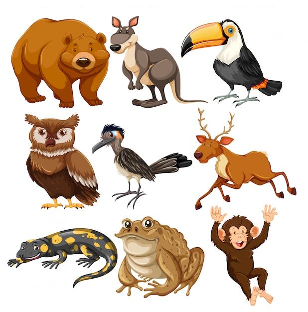 Conjunto de animais diferentes Vetor grátis