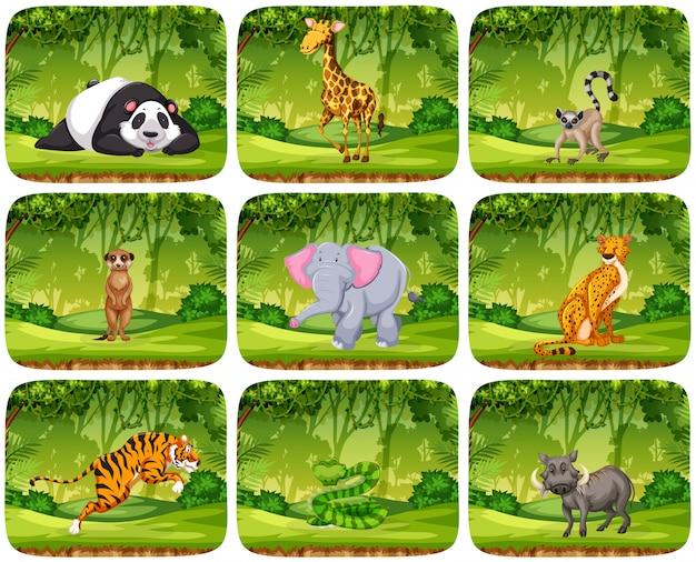 Conjunto de animais em cenários de selva Vetor Premium