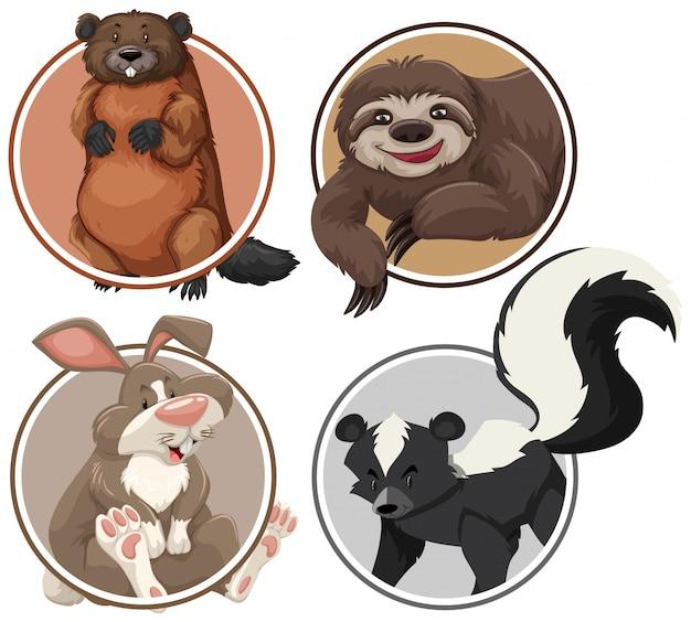 Conjunto de animais exóticos no modelo de círculo Vetor Premium