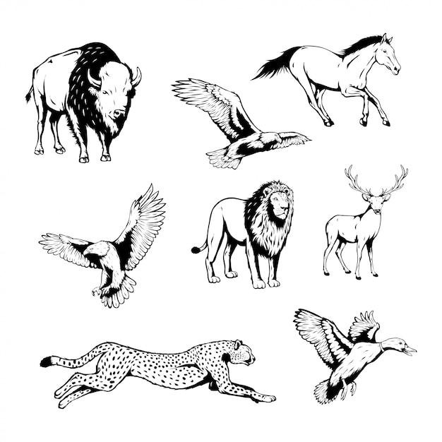 Conjunto de animais selvagens com ilustração vetorial de mão desenhada Vetor Premium