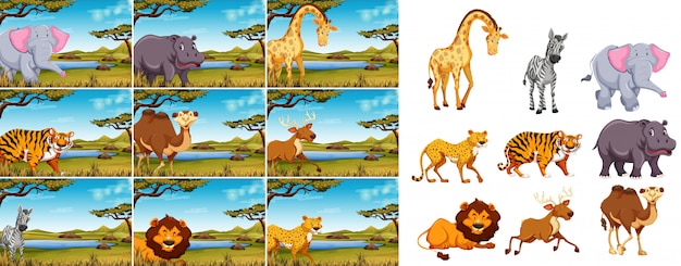 Conjunto de animais selvagens na natureza Vetor Premium
