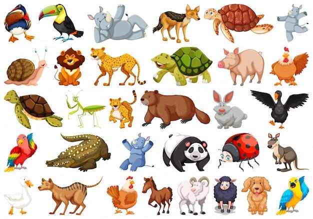 Conjunto de animais selvagens Vetor grátis