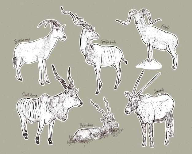 Conjunto de antílopes, esboço desenhado de mão de animais Vetor Premium