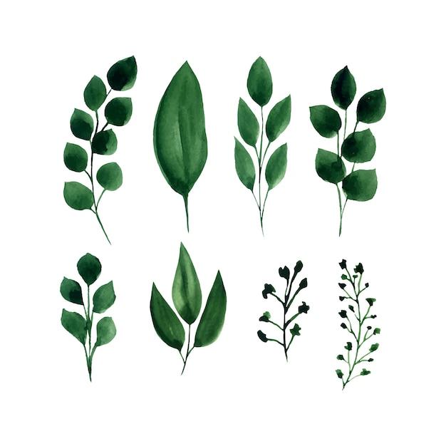 Conjunto de aquarela de vetor de folhas verdes. Vetor grátis