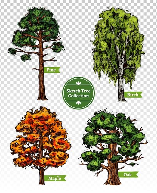 Conjunto de árvore de esboço de cor Vetor grátis
