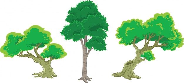 Conjunto de árvore verde Vetor Premium