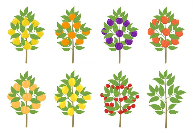 Conjunto de árvores de fruto. mandarim de maçã, pêssego e limão. ilustração vetorial árvores de pomar de frutas plantam colheita. Vetor Premium