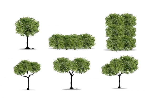 Conjunto de árvores realistas em fundo branco. Vetor Premium