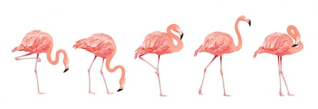 Conjunto de aves flamingo rosa Vetor Premium