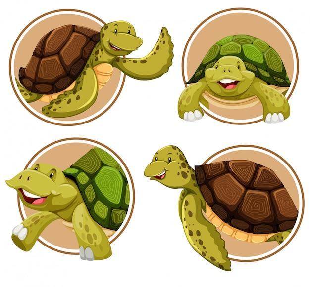 Conjunto de banner de tartaruga Vetor Premium