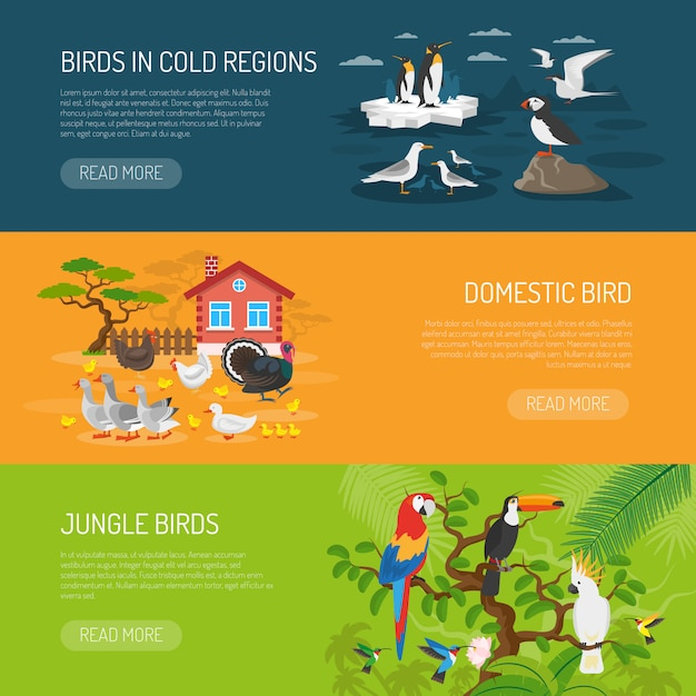 Conjunto de banners horizontais de pássaros Vetor grátis