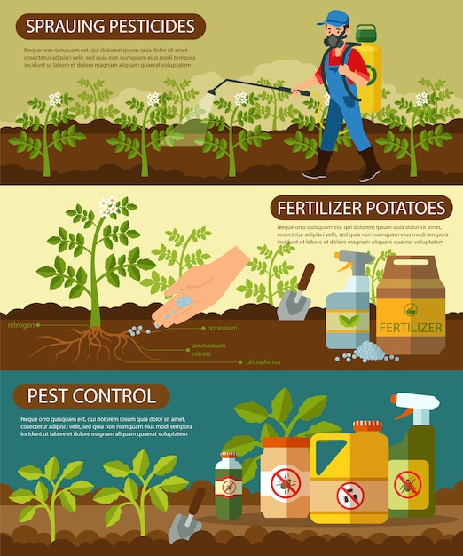 Conjunto de batatas fertilizantes e pulverização de pesticidas. Vetor Premium