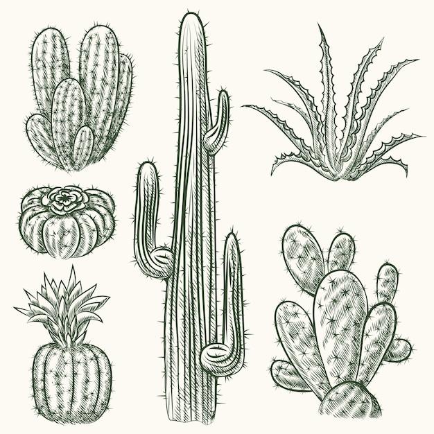 Conjunto de cacto desenhado à mão. planta mexicana, flora exótica Vetor Premium