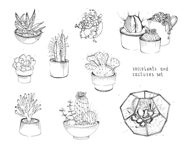 Conjunto de cactos e suculentas. plantas de coleta em vasos, florarium isolado Vetor Premium