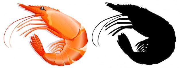 Conjunto de camarão no fundo branco Vetor grátis