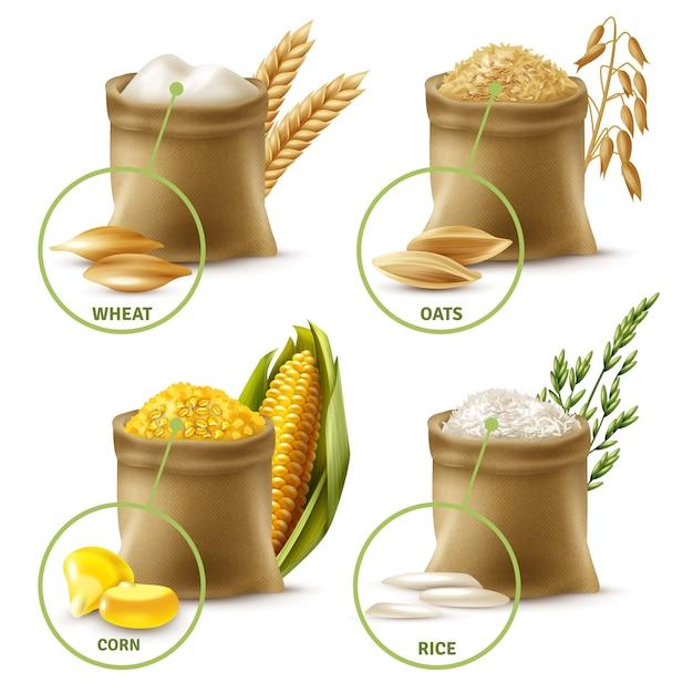 Conjunto de cereais agrícolas Vetor grátis