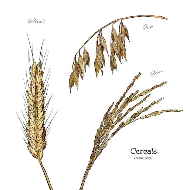Conjunto de cereais Vetor Premium
