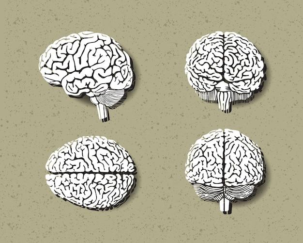 Conjunto de cérebro humano. Vetor Premium