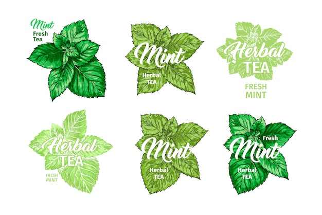 Conjunto de chá de ervas com modelos de rótulo de hortelã fresca. Vetor grátis