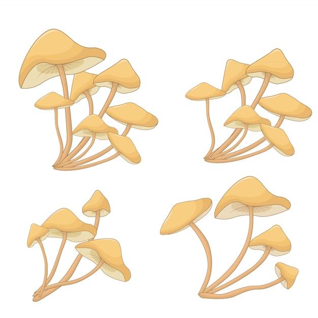 Conjunto de cogumelos cogumelos. plantas florestais Vetor Premium