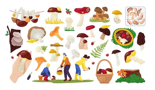 Conjunto de coleção de cogumelos comestíveis na natureza, para comida na ilustração em branco. coletores de cogumelos de outono na floresta. Vetor Premium