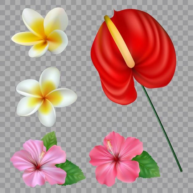 Conjunto de coleção de flores tropicais. elementos do vetor isolado no fundo branco Vetor Premium