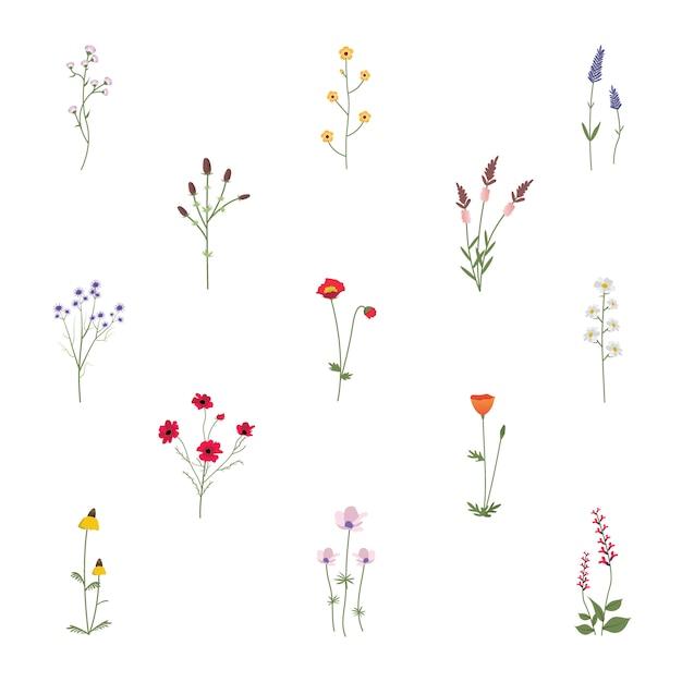 Conjunto de coleção de ilustração vetorial de flores silvestres Vetor grátis
