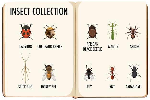 Conjunto de coleção de insetos no livro Vetor grátis
