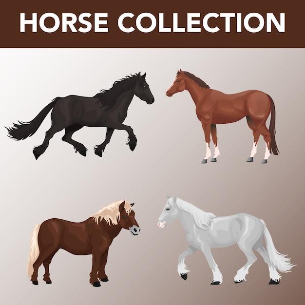 Conjunto de coleção de raças de cavalos Vetor Premium