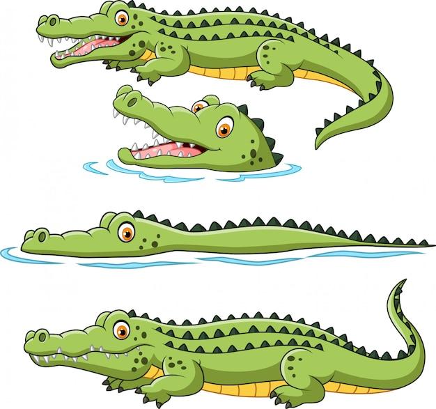 Conjunto de coleta de crocodilo Vetor Premium
