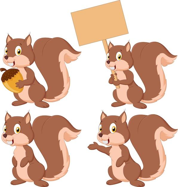 Conjunto de coleta de esquilo de caixa bonito Vetor Premium