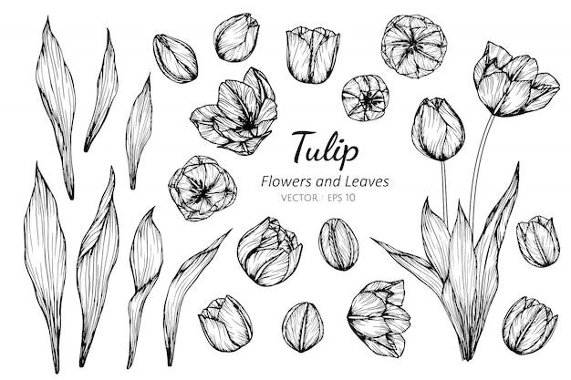 Conjunto de coleta de flor tulipa Vetor Premium