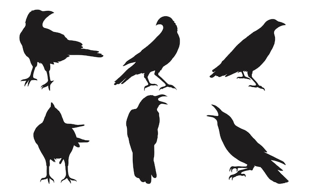 Conjunto de corvo no fundo branco. Vetor Premium