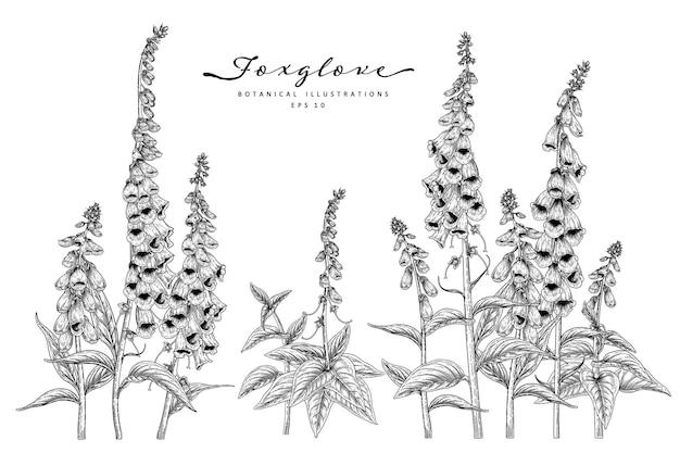Conjunto de dedaleira flor ilustrações botânicas desenhadas de mão. Vetor grátis