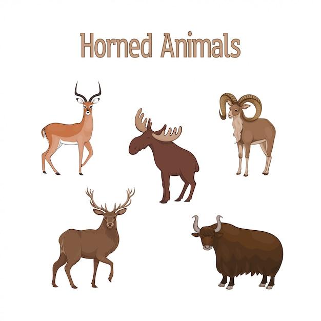 Conjunto de desenhos animados bonitos animais com chifres. impala, urial, veado, iaque, alce Vetor Premium