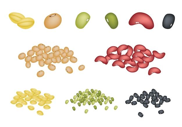 Conjunto de diferentes grãos no fundo branco Vetor Premium