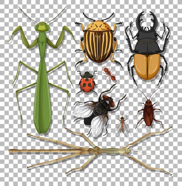 Conjunto de diferentes insetos em fundo transparente Vetor grátis