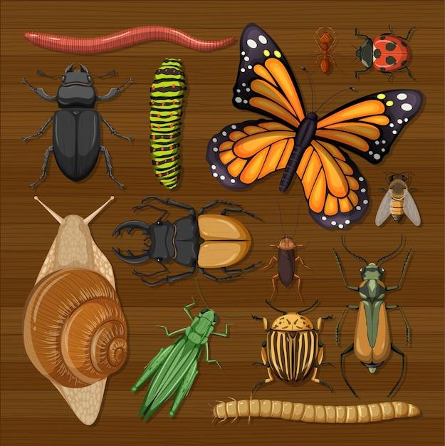 Conjunto de diferentes insetos no fundo do papel de parede de madeira Vetor grátis